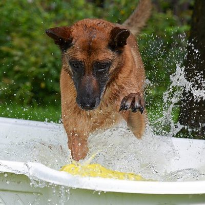 Water Conservation Does Not Exclude Our Furry Family Members